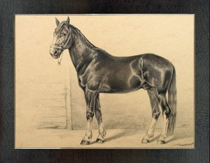 Orlov stallion breed DARYUL